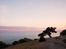 Juniper tree at sunset stock photography