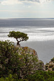 Seascape with tree on top of a cliff against the sea Stock Images
