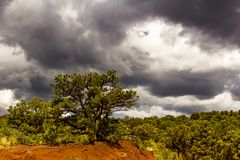 Juniper trees in Garden of the Gods with dramatic sky Stock Photo