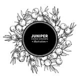 Juniper vector drawing frame. Isolated vintage template of berr vector illustration