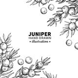 Juniper vector drawing frame. Isolated vintage template of berr royalty free illustration