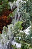 Juniper waterfalls which is winter season specific royalty free stock photos