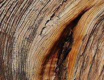 Juniper wood texture Stock Photography