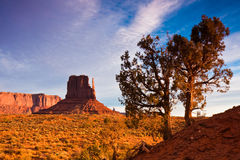 Junipers in Monument Valley. Juniper trees on an early morning in Monument Valley, Utah Stock Photos