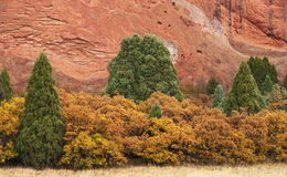 Junipers and Yellow Bushes With Red Rock Royalty Free Stock Photo