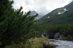 Juniperus y secuencia en la montaña Imagenes de archivo