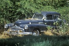 A junk car sitting in overgrown trees in Hawaii Stock Photography