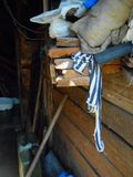 Junk in the shed. Boards, rag, tools Royalty Free Stock Image