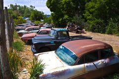 Junk yard with old beautiful oldtimers Stock Photography