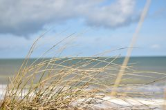 Juno beach. Picture of juno beach in Normadie dunes micro-photographie of plants with a back lanscape of sea royalty free stock photos
