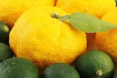 Junos de la fruta cítrica Foto de archivo
