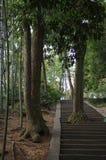 Junshan ö i Dongting sjön Fotografering för Bildbyråer