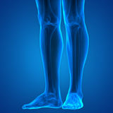Juntas de la pierna del cuerpo humano Fotos de archivo libres de regalías