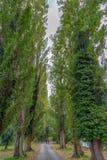 Junte caminar en un callejón en un bosque fotografía de archivo libre de regalías