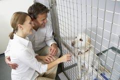 Junte el perro de animal doméstico que visita Imagenes de archivo