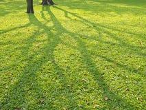 Junte-se à sombra da árvore fotografia de stock