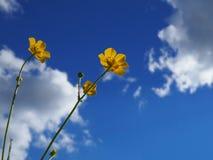 Junto al cielo Imagen de archivo