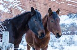 Junto en rancho Fotos de archivo libres de regalías