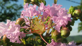 Jupiter Flower royalty free stock images