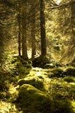 Jura-Bäume 2 stockbilder