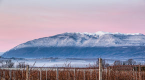 Jura Mountain And Vineyard Stock Image