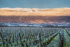Jura Mountain And Vineyard Royalty Free Stock Image