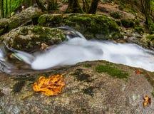 Jura Riverscape, Frankrike II Arkivfoto