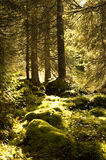 Jura Trees 2 Stock Images