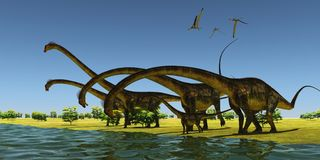 Jurassic Barosaurus Dinosaurs. A herd of Barosaurus dinosaurs bend their long necks to drink from a river as a flock of Pteranodons fly over Stock Image