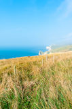 Jurassic Coast Stock Photography