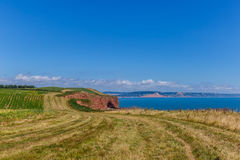 Jurassic Coast in summer Royalty Free Stock Images