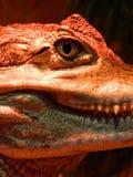 Jurassic Park Immagini Stock