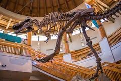 Jurassic Park Discovery Center at Universal Studios. Orlando, Florida: November 30, 2017: Jurassic Park Discovery Center at Universal Studios Islands of Stock Image