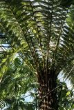 Jurassic Park plant fern tree in Greenhouse stock image