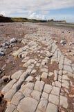 Jurassic period lias stone on Doniford beach, Exmoor, UK Stock Photos
