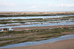 Jurassic period lias stone on Doniford beach, Exmoor, UK Royalty Free Stock Photos