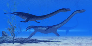 Jurassic reptilar för Plesiosaurus Fotografering för Bildbyråer