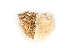 Jurassic sponge (hyalotragos) Stock Images