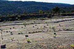 Jurassica del Praia foto de archivo