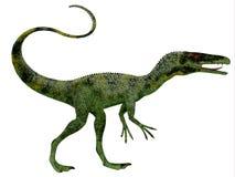Juravenator dinosaurieprofil Royaltyfria Foton