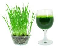 Jus d'herbe de blé Photos libres de droits