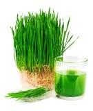 Jus de Wheatgrass avec du blé poussé du plat Photo stock