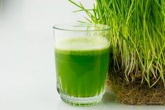 Jus organique vert d'herbe de blé prêt à boire Photographie stock libre de droits