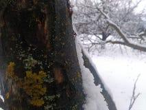 Winter tree. Jusr a winter tree stock images