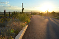 Morning light on desert road cactus landscape. Just as the sun rises on a remote desert road in the American Southwest long shadows of saguaro cactus fill the Royalty Free Stock Image