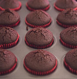 Just baked fresh chocolate cupcakes in oven tray Stock Photo