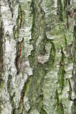 Just bark on a tree. Stock Photography