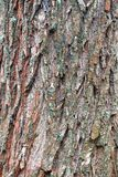 Just bark on a tree. Royalty Free Stock Photography