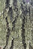 Just bark on a tree. stock image