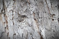 Just bark on a tree. Beautiful structural surface of the bark on stock photography